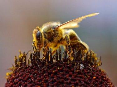 Bee Joh Sullivan