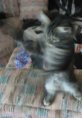Tara blur
